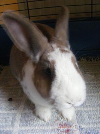 Charlotte,  lapine stérilisée, née en 2009 - Page 3 Fa_avr10