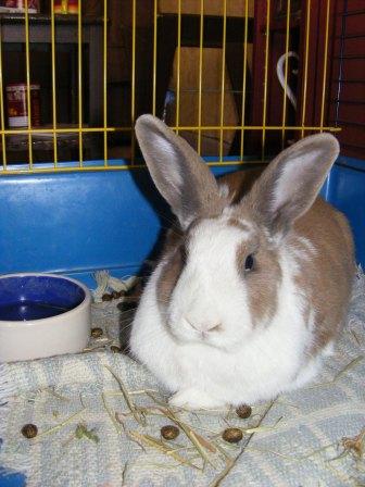 Charlotte,  lapine stérilisée, née en 2009 - Page 3 Fa_avr12