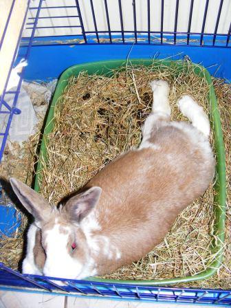 Charlotte,  lapine stérilisée, née en 2009 - Page 3 Fa_jui10