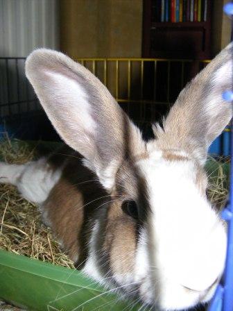Charlotte,  lapine stérilisée, née en 2009 - Page 3 Fa_jui11