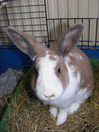 Charlotte,  lapine stérilisée, née en 2009 - Page 3 Juin_010