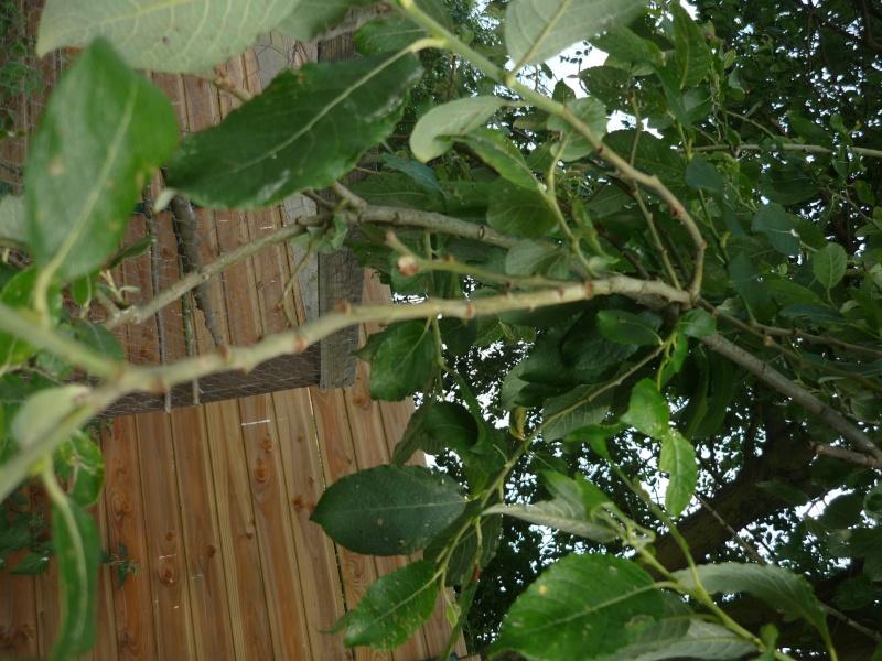 Quelle sorte d'arbre? P1070319