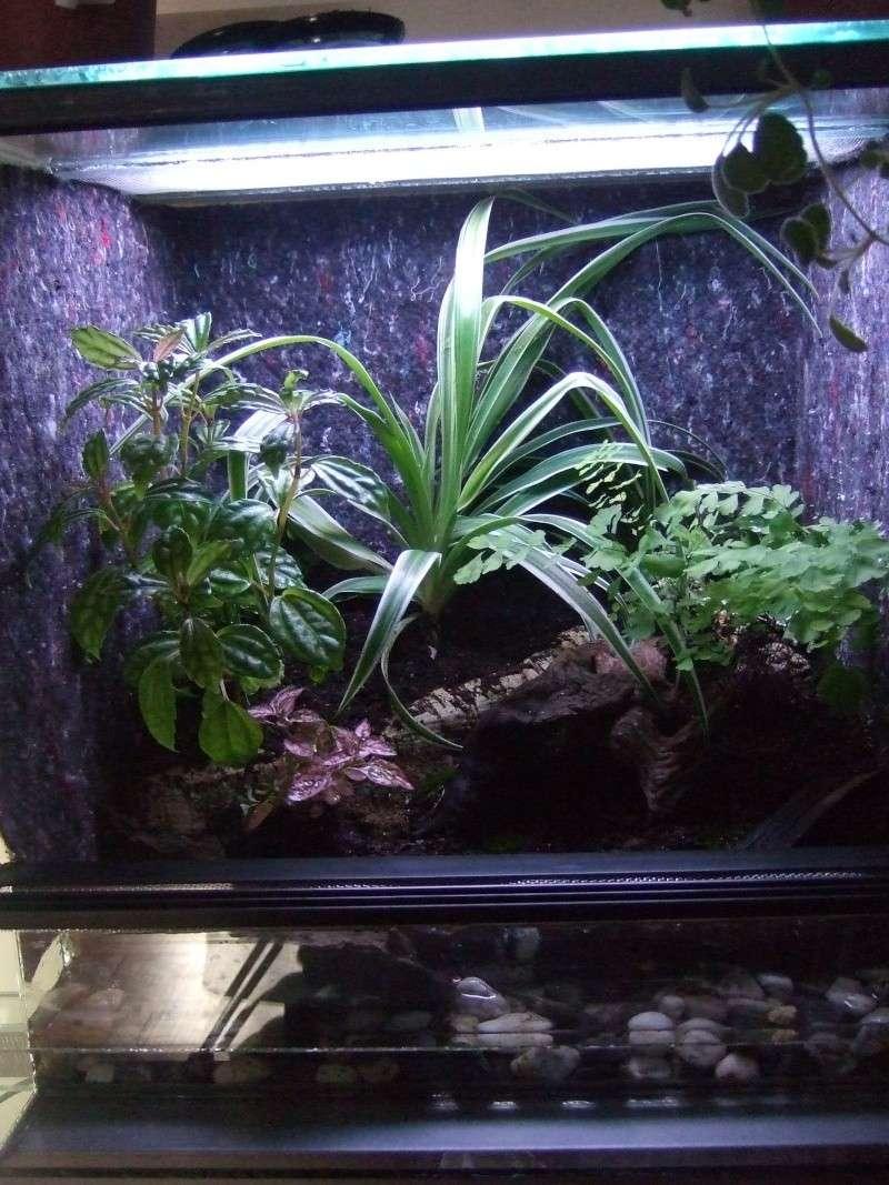 Mon nouveau terrarium Photo_22
