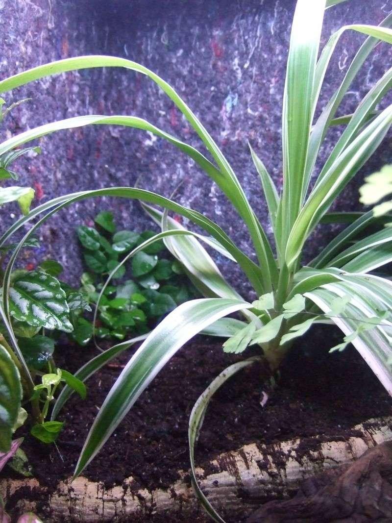 Mon nouveau terrarium Photo_24