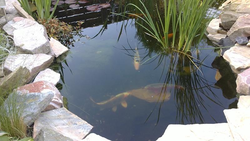 mon bassin aujourd'hui 04052010