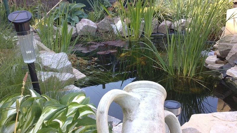 mon bassin aujourd'hui 04052011