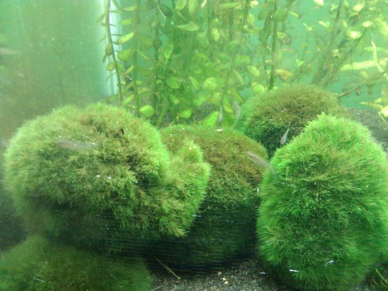 Mes premieres algues :( Algues12