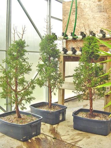 Juniper forest Reworked First_10