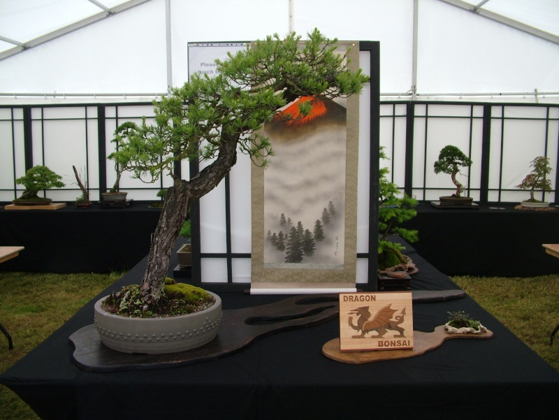 Dragon Bonsai at the Welsh Game Fair 2011 Dscf5453