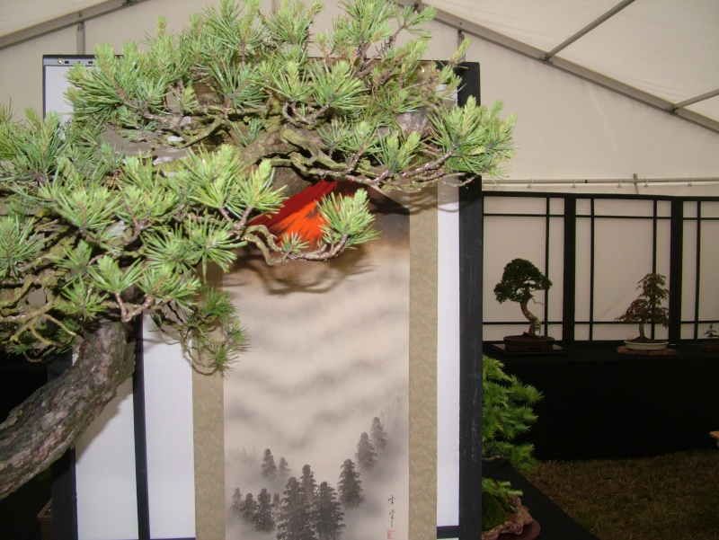 Dragon Bonsai at the Welsh Game Fair 2011 Dscf5510