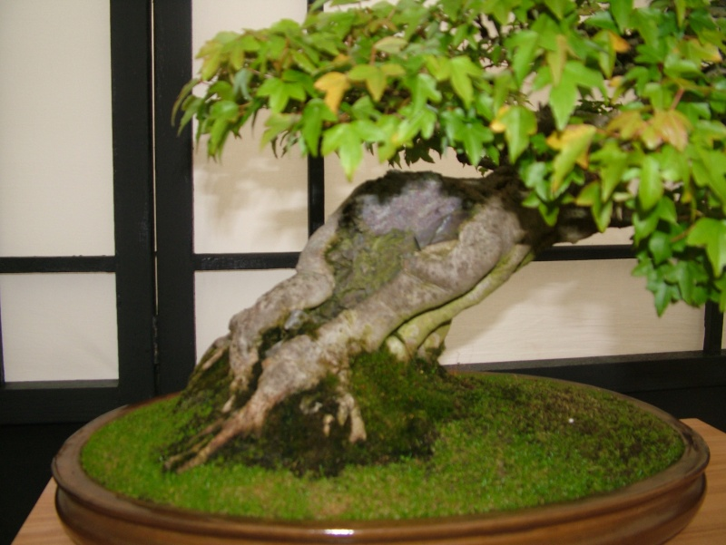 Dragon Bonsai at the Welsh Game Fair 2011 Dscf5513