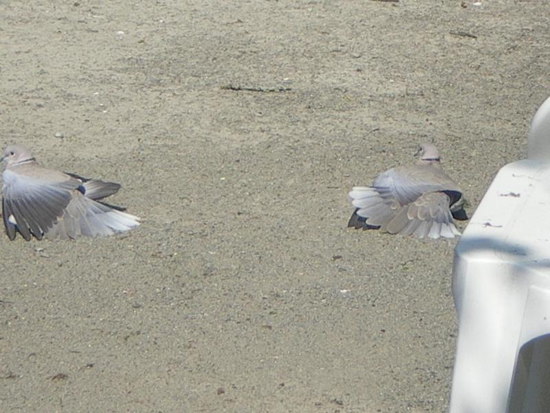 bizarre l'oiseau Imgp4912