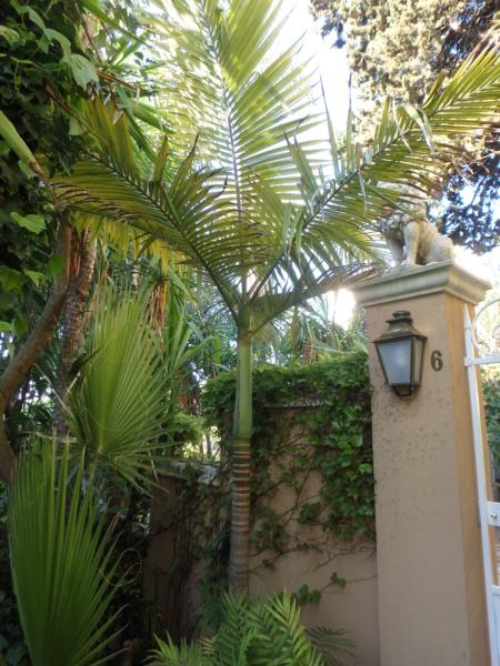 Le jardin tropical de Thierry A_alex11