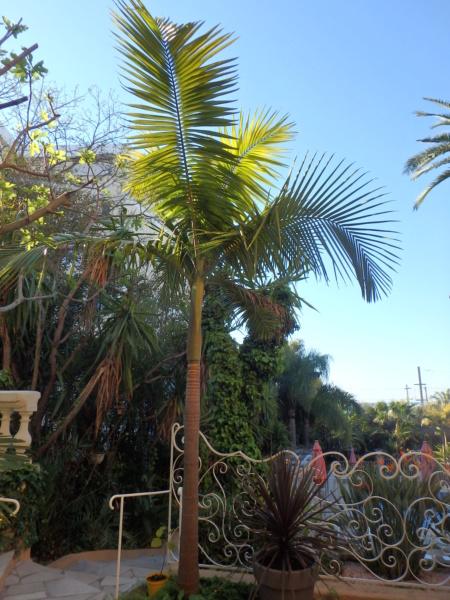 Le jardin tropical de Thierry A_c_il11