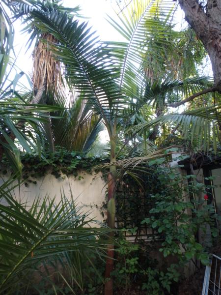 Le jardin tropical de Thierry P4152111