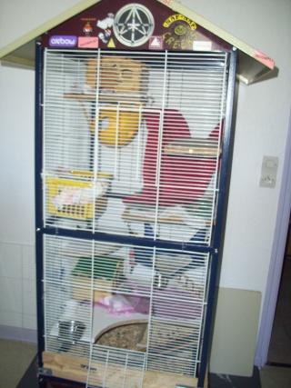 mes cages... et la pièce de vie  - Page 3 00214