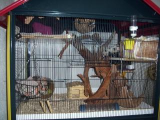 mes cages... et la pièce de vie  - Page 3 01312
