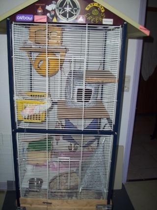 mes cages... et la pièce de vie  - Page 3 02013