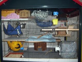 mes cages... et la pièce de vie  - Page 5 9_05_116