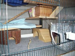 mes cages... et la pièce de vie  - Page 5 9_05_117