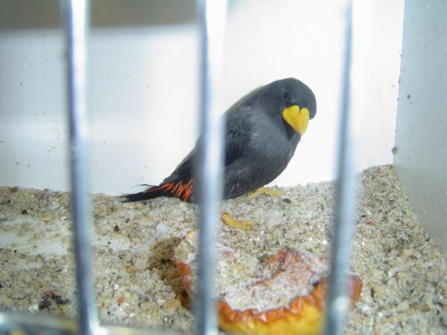 oiseau à identifier Dsc00910