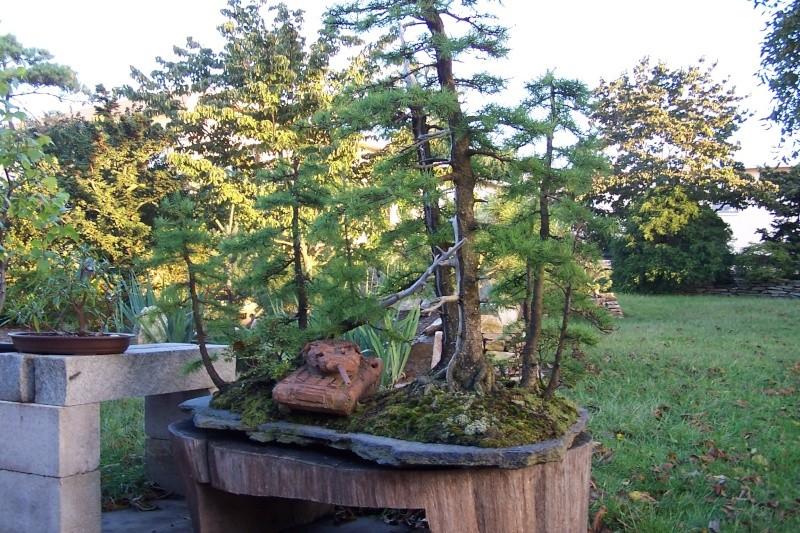 Spring in Nick Lenz's garden 13-09-10
