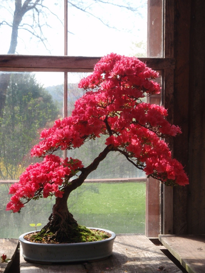 Spring in Nick Lenz's garden P5063211