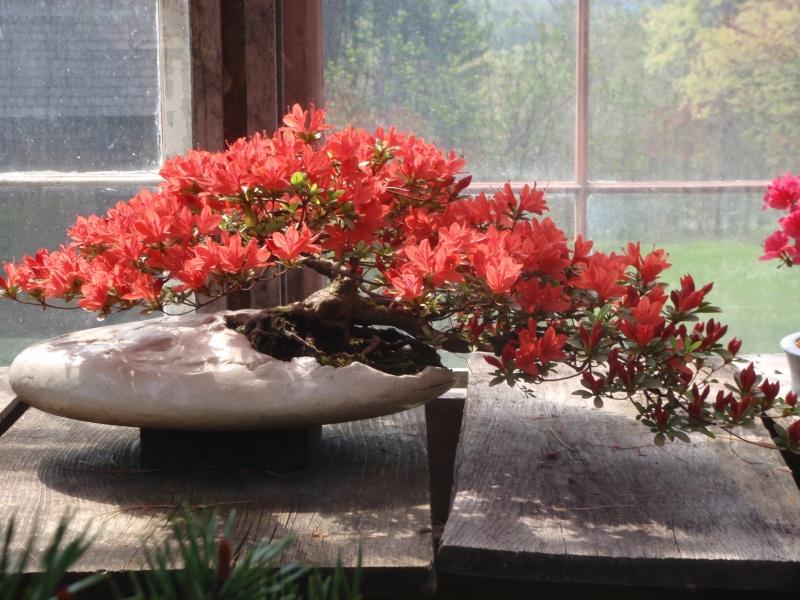 Spring in Nick Lenz's garden P5063212