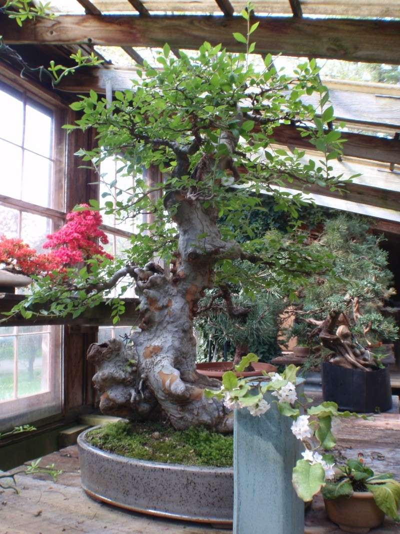 Spring in Nick Lenz's garden P5063213