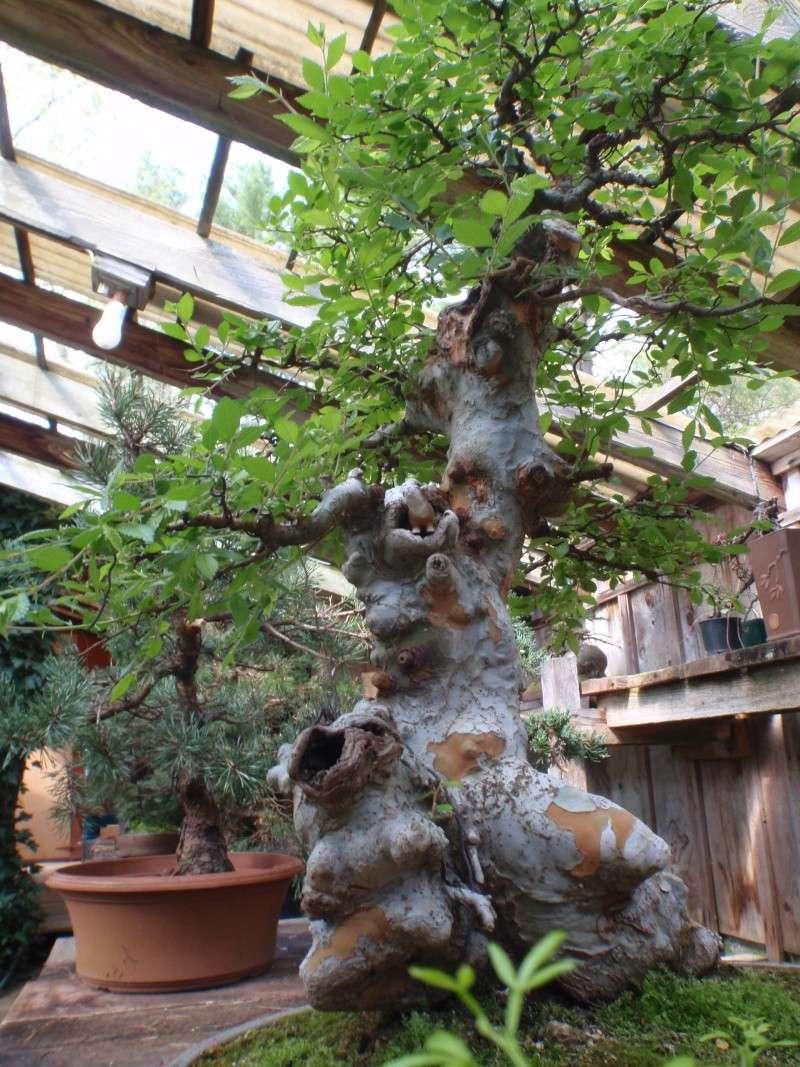 Spring in Nick Lenz's garden P5063214