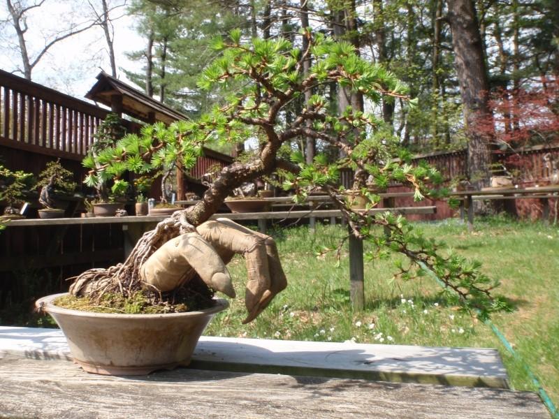 Spring in Nick Lenz's garden P5063315