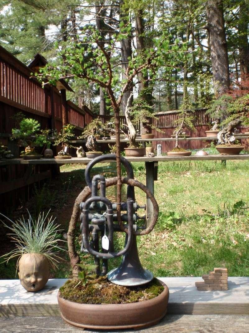 Spring in Nick Lenz's garden P5063316