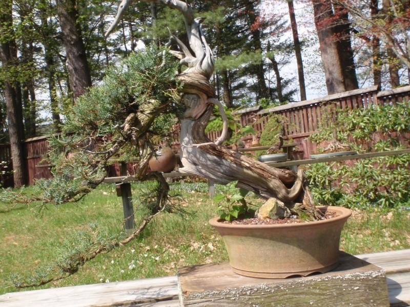 Spring in Nick Lenz's garden P5063318