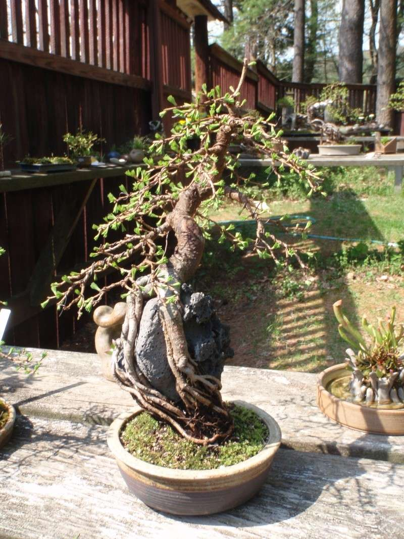 Spring in Nick Lenz's garden P5063321
