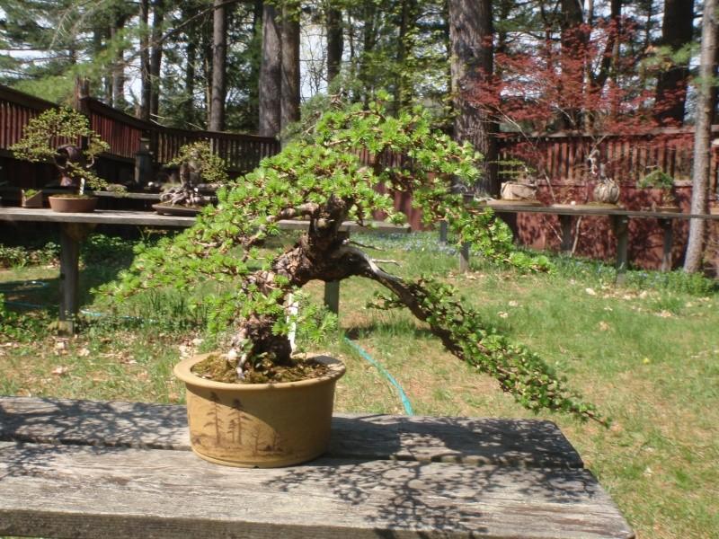 Spring in Nick Lenz's garden P5063323