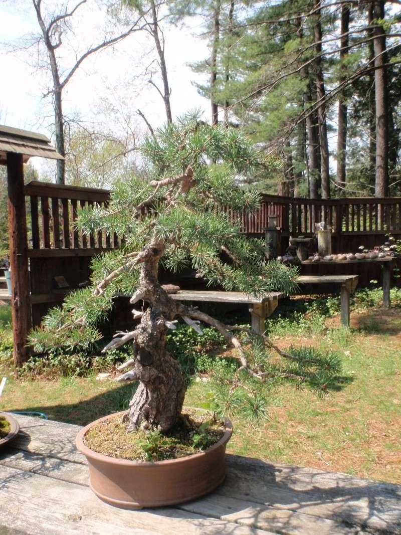 Spring in Nick Lenz's garden P5063325