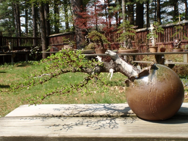 Spring in Nick Lenz's garden P5063326