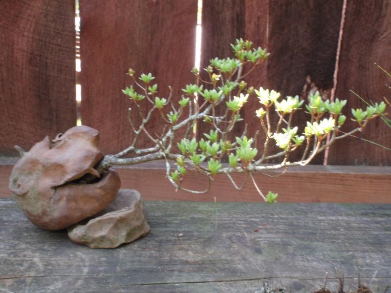 Spring in Nick Lenz's garden P5063335