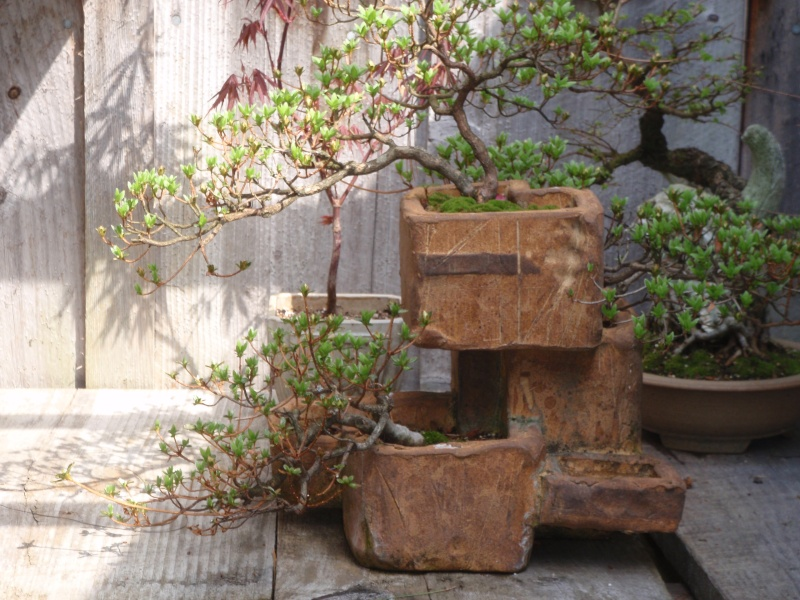 Spring in Nick Lenz's garden P5063337