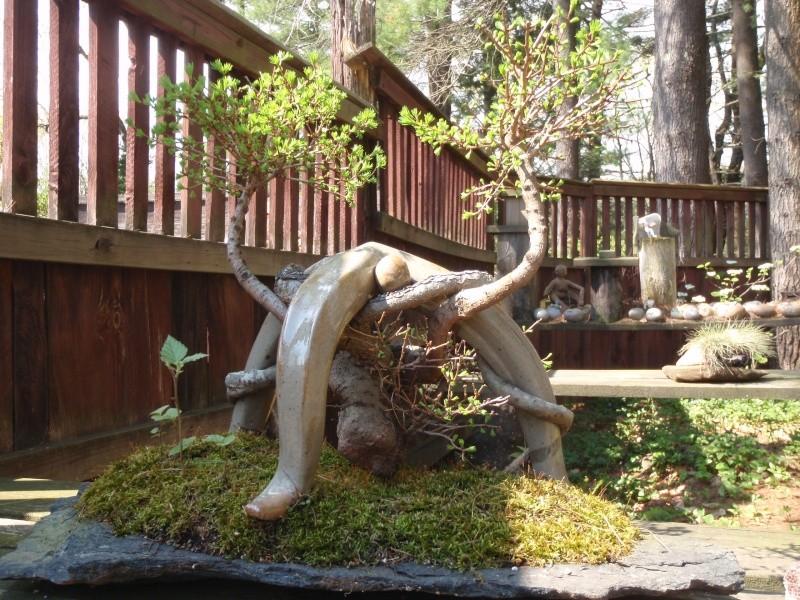 Spring in Nick Lenz's garden P5063342