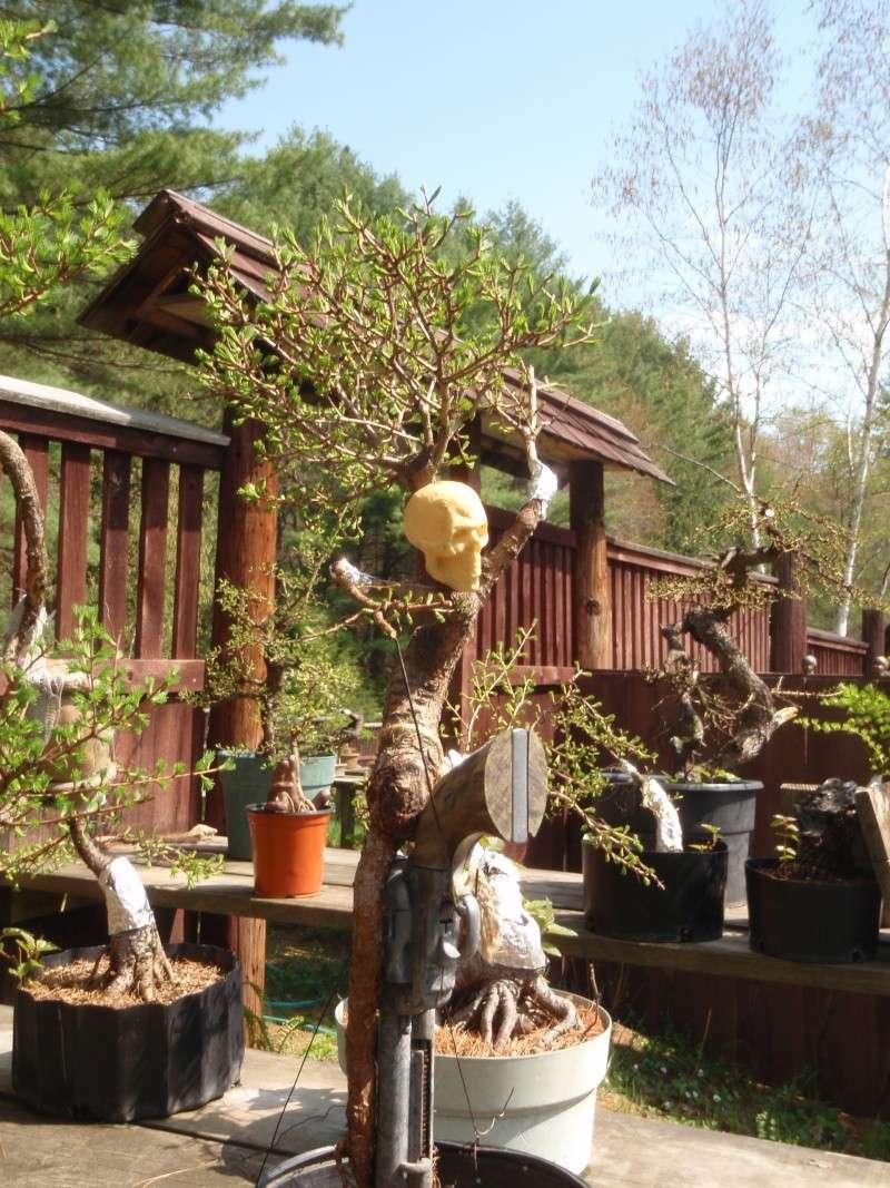 Spring in Nick Lenz's garden P5063343