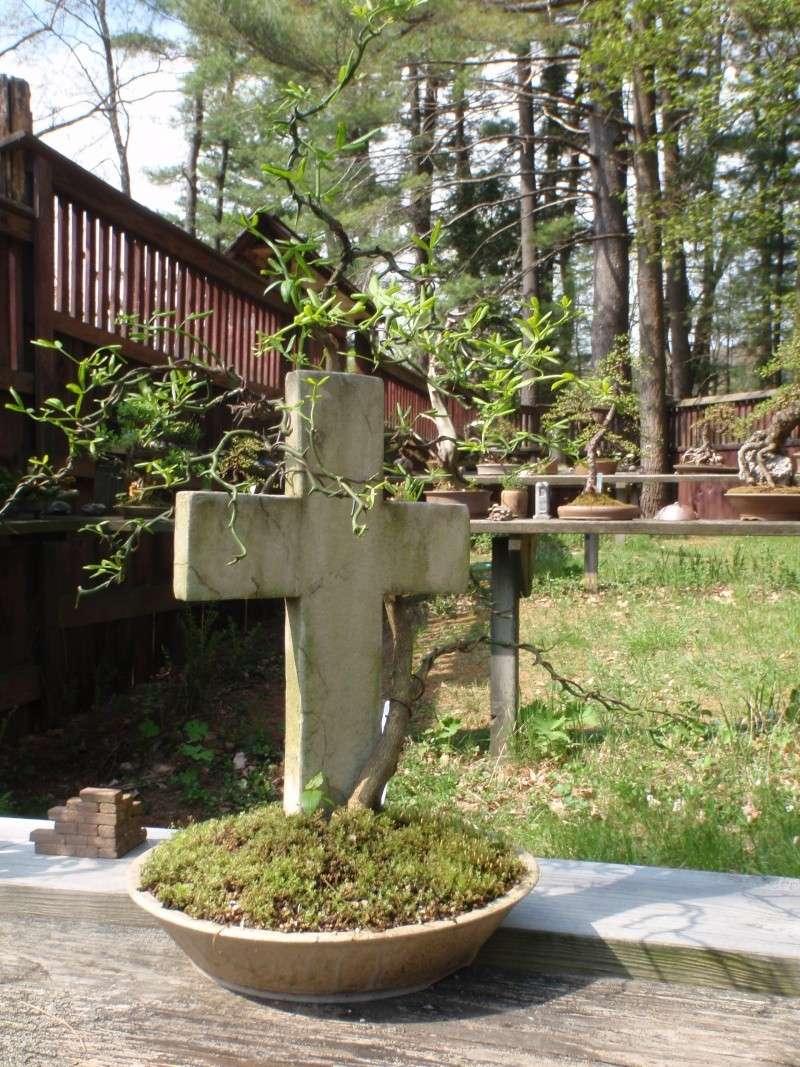 Spring in Nick Lenz's garden P5063344
