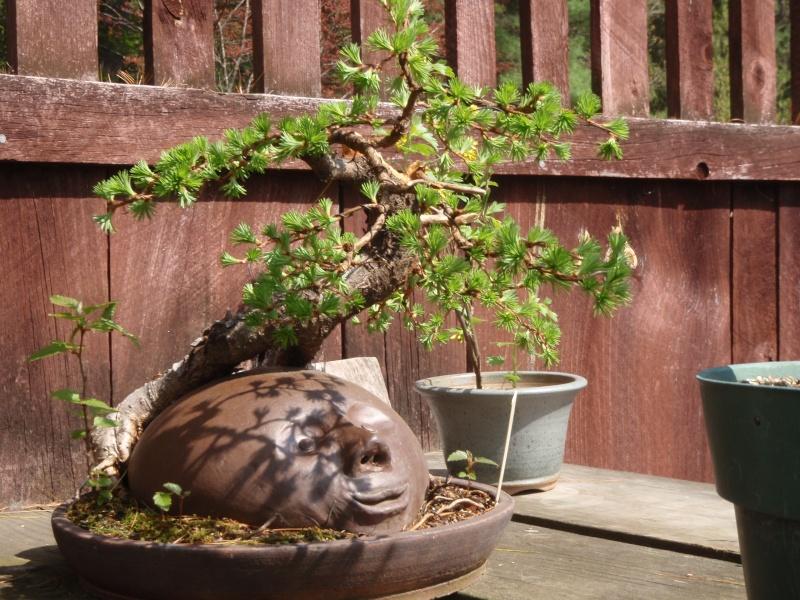 Spring in Nick Lenz's garden P5063345