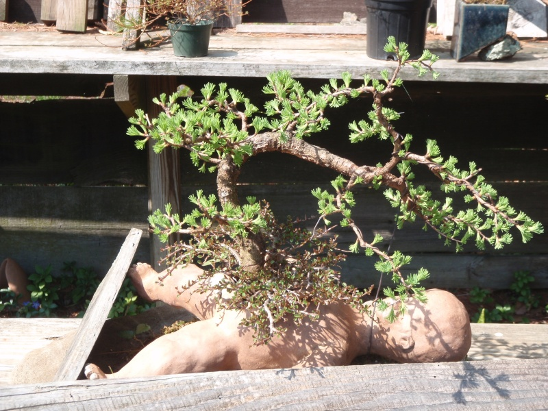 Spring in Nick Lenz's garden P5063347