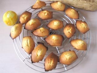 Madeleines, citron - fleur d'oranger Dscf1813