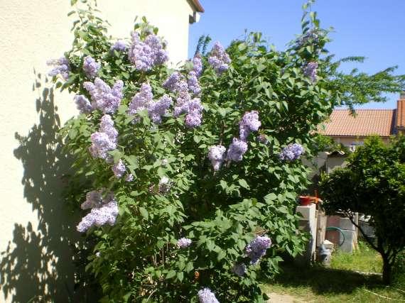 Floraisons du mois d'avril Le_10_10