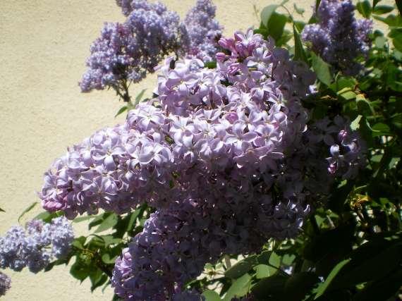 Floraisons du mois d'avril Le_10_12