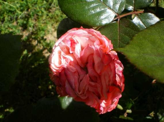 Floraisons du mois d'avril Le_10_15