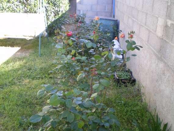 Les fleurs de mon jardin Le_19_10