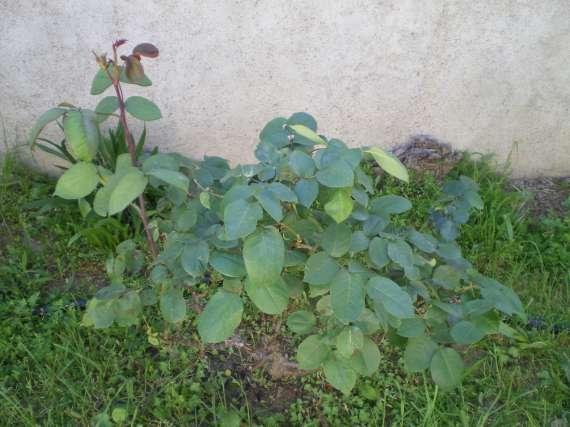 Les fleurs de mon jardin Le_19_14